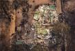 Последствия пожаров в Сарсфилде, штат Виктория