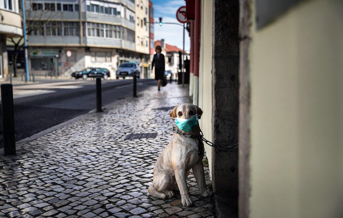 11 марта ВОЗ объявила пандемию в связи с COVID-19. На фото: собака в защитной маске возле ресторана в Лиссабоне, Португалия.