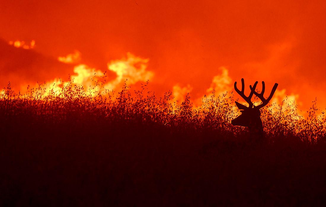 Лесной пожар в окрестностях города Уинтерс, США