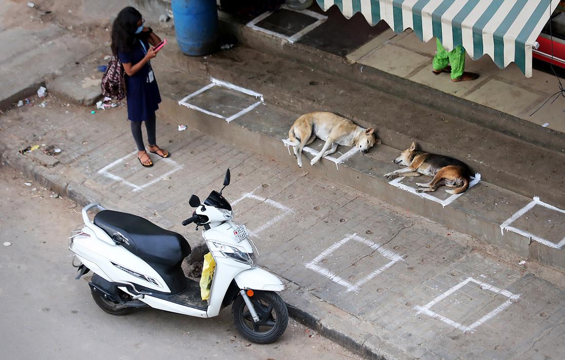 1 июля. Собаки соблюдают меры социального дистанцирования в индийском Бангалоре.