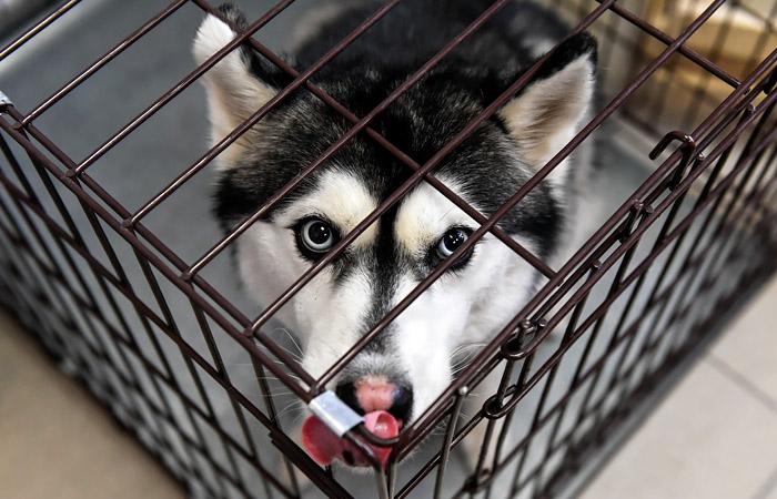 """""""Аэрофлот"""" объяснил отказ взять собак на рейс из Шанхая """"признаками контрабанды"""""""
