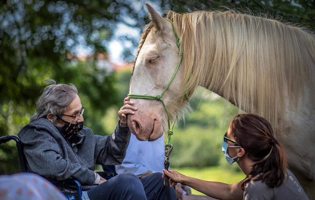 22 июля. В больнице Сестер милосердия святого Карла Боромейского в Праге для пациентов организовали сенсорную терапию с помощью лошадей.