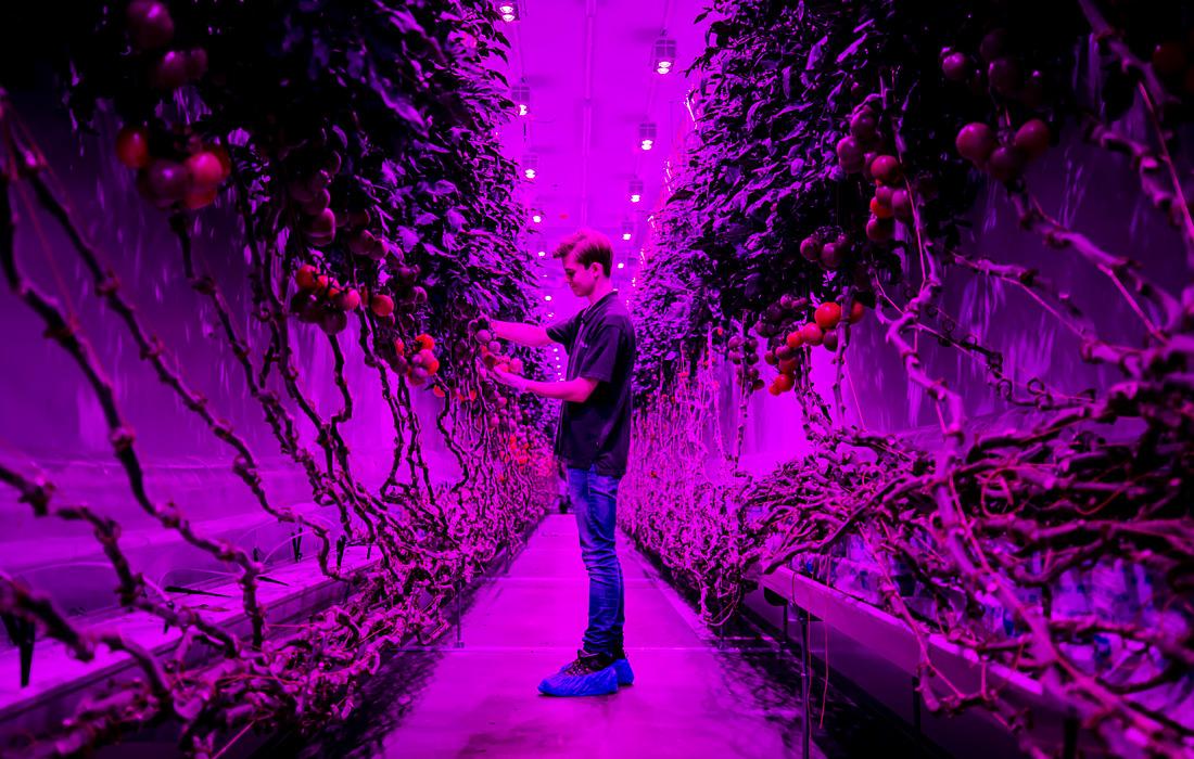 Производственный цех PlantLab в Амстердаме