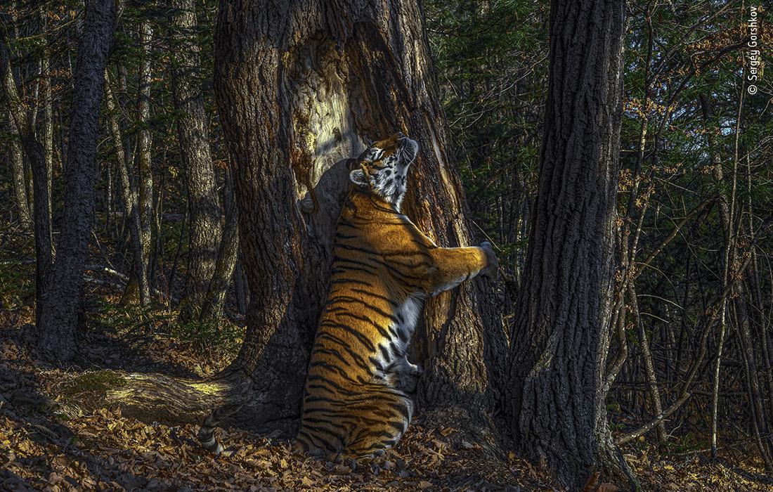 Лучшее фото  дикой природы 2020 года