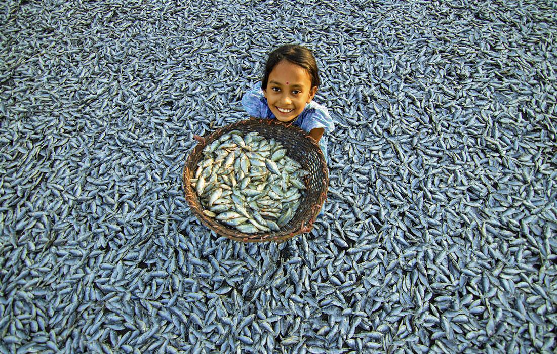 Приготовление сухой рыбы в бангладешском городе Читагонг