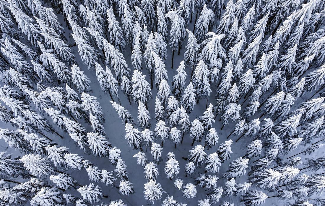 Заснеженный лес в немецком Шмиттене