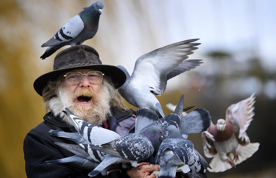 Мужчина кормит птиц на берегу Темзы в Лондоне