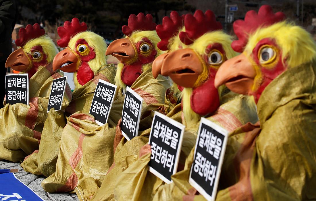 В Сеуле прошла акция зоозащитников против массовой ликвидации птиц на фермах из-за высокопатогенного птичьего гриппа