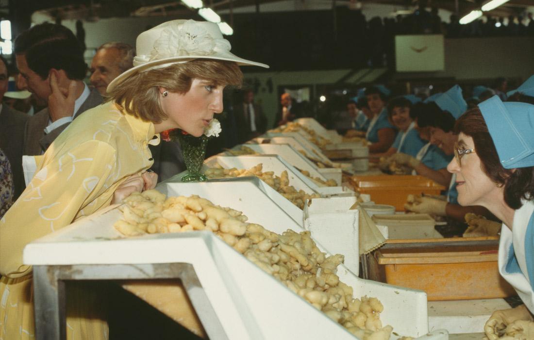 Принц Чарльз и Диана посещают фабрику по переработке имбиря в Квинсленде. Австралия. Апрель 1983 года.
