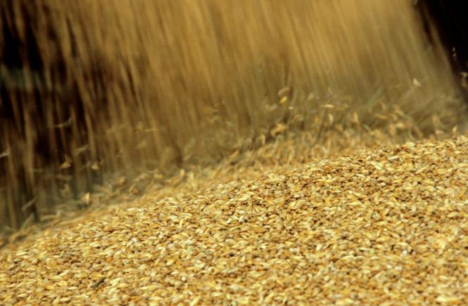 Иван Силаев: СССР необходимо импортировать 48,7 млн тонн зерна