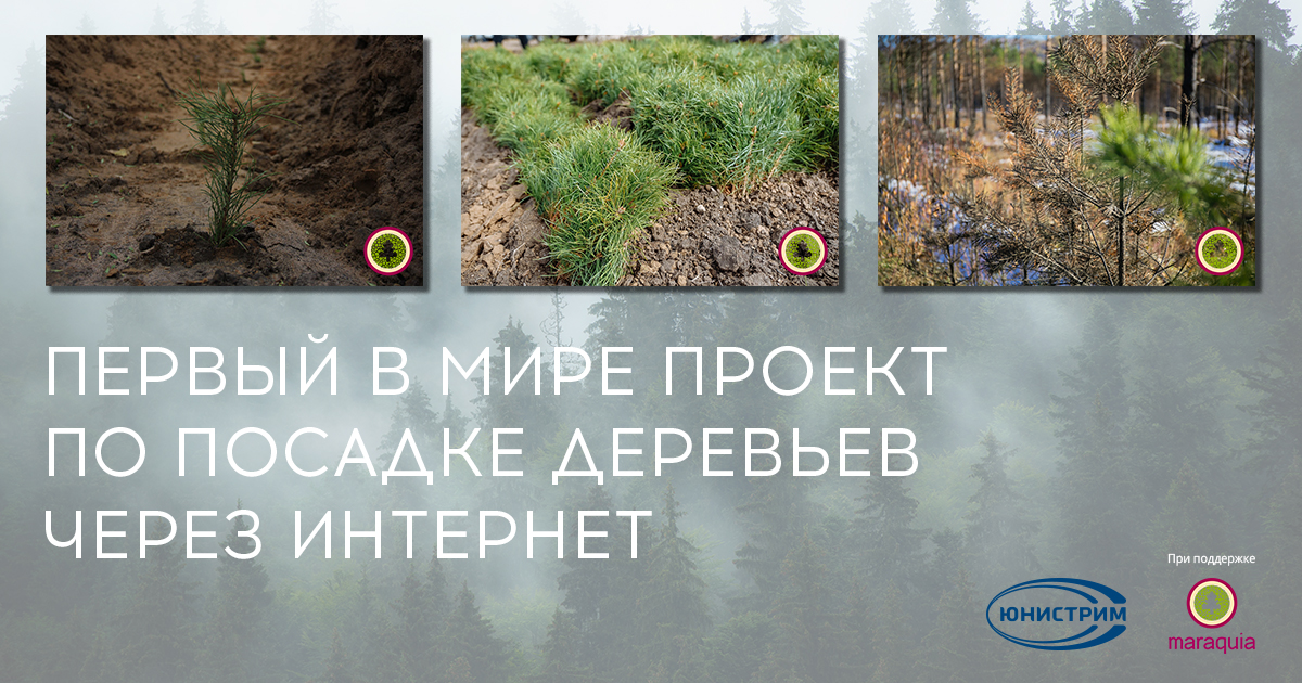 Юнистрим помогает возрождать леса Севана
