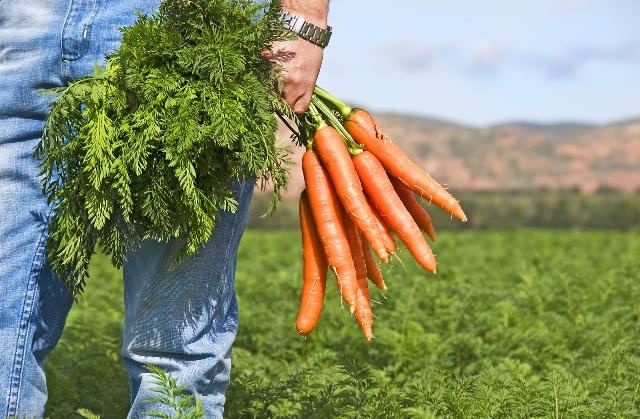 Основные принципы организации крестьянского фермерского хозяйства
