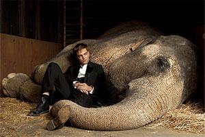 Непримечательный слон