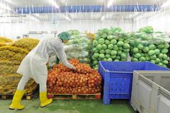 Овощей из Европы становится больше