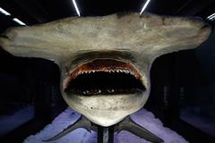 Любителям не советуют идти на акул