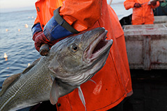 Платная рыбалка под запретом