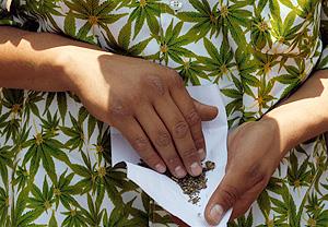 Коноплю вернуть как пролечить марихуану