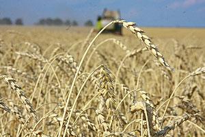 Битва за урожай: итоги