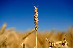 2011: цена аграрных рекордов