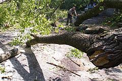 Последствия урагана в столице