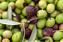 Оливковое масло подогревает кризис