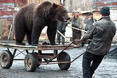 Модернизации России мешает ее культурный код