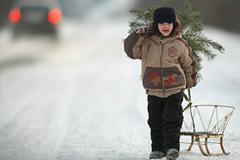 Экономика новогодних елок: дешевле, но вредней