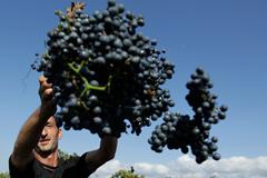 Грузинское вино возвращается
