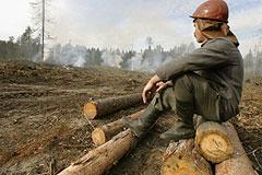 Пожары, короеды и сухостой