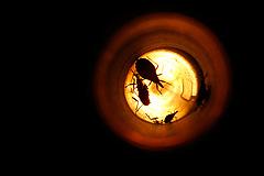 3 причины не бояться нашествия насекомых