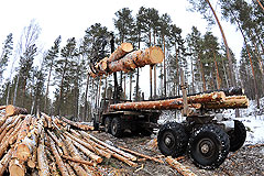 Расследование: как воруют российский лес