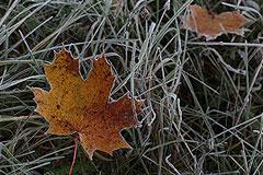 Москва побила температурный минимум осени