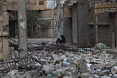 В Сирии договорились о перемирии