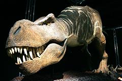 В Португалии нашли останки крупнейшего динозавра Европы