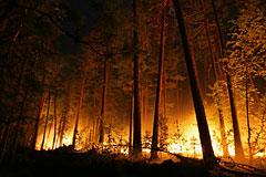 В Иркутской области из-за лесного пожара сгорело более 20 домов