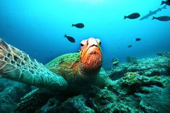 Внук Жака-Ива Кусто побил рекорд пребывания под водой