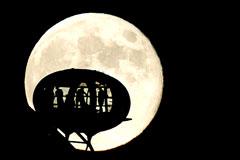 Россия, США, Европа и Япония решили создать станцию на обратной стороне Луны