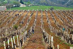 Крымские виноделы предложили ограничить импорт европейских вин в Россию