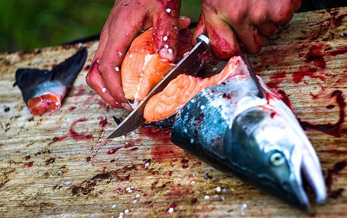 Норвегия нашла способ обхода российского эмбарго на поставки лосося