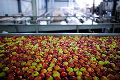 Тимченко решил инвестировать в выращивание яблок