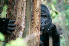 WWF сообщил о двукратном сокращении количества диких животных за 40 лет
