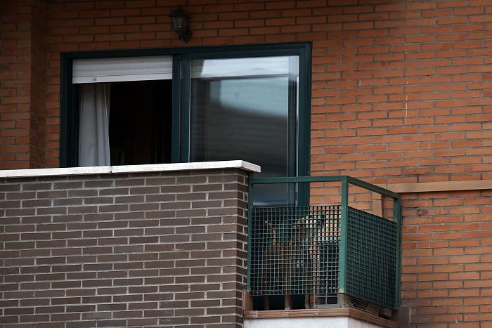 Испанские власти усыпили собаку заразившейся вирусом Эбола медсестры
