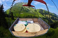 Швейцарские сыровары пострадали из-за сильного франка