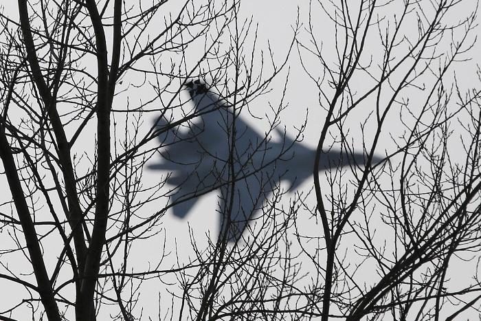 Постпред РФ попросил НАТО не удивляться действиям российских ВВС
