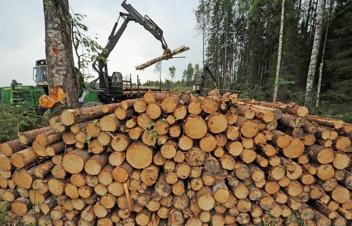Финские эксперты рассказали о последствиях возможных ограничений в торговле лесом
