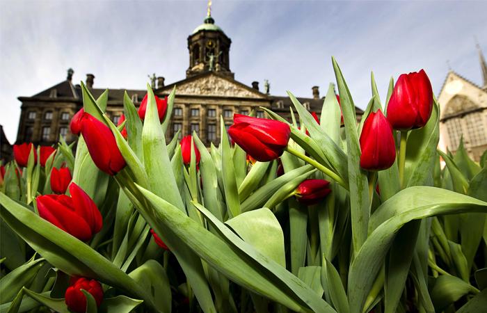 Россельхознадзор задумался о запрете поставки цветов из Нидерландов