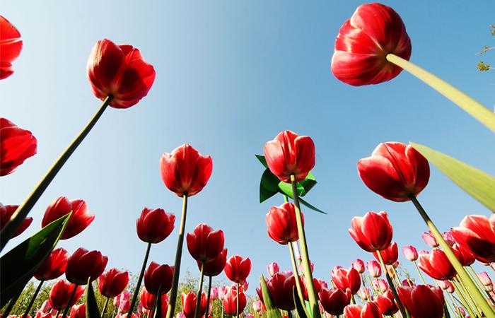 Россельхознадзор предложил странам ЕС прекратить сертификацию цветов из Нидерландов