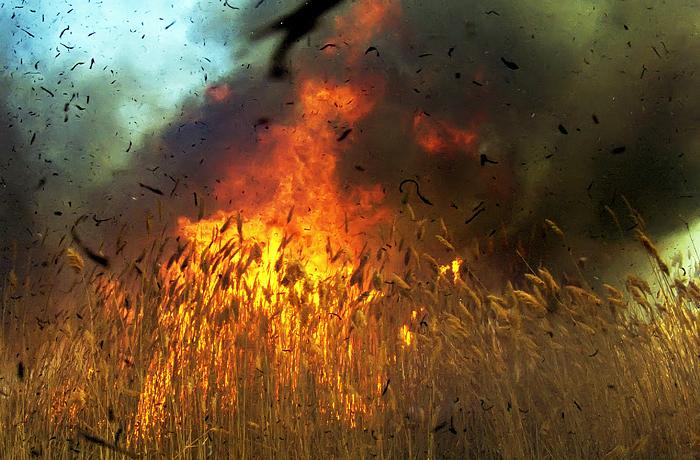 В Кремле ответили пригрозившей сжечь урожай в знак протеста фермерше