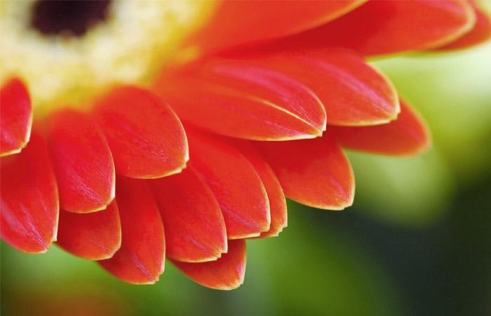Эксперт спрогнозировал 2-3 кратное подорожание цветов в РФ