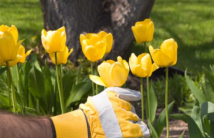 РФ будет принимать голландские цветы только по результатам экспертизы